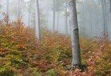 Mi fán terem az erdő?