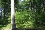 Közjóléti erdőgazdálkodás, természetvédelem